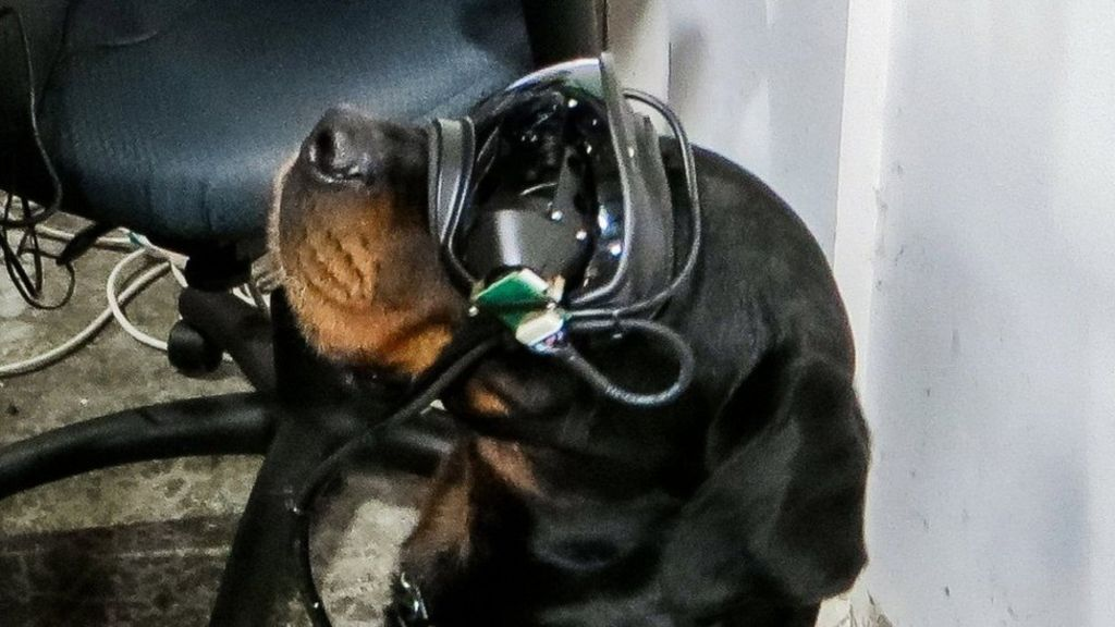 Augmented reality goggles for military dogs