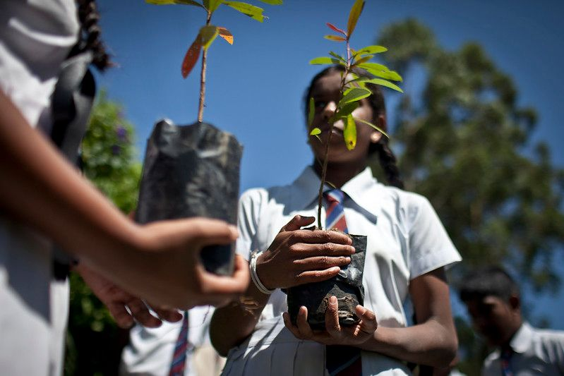 Students holding trees to plant