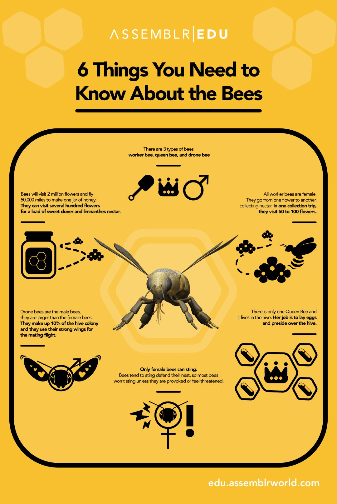 An infographic about bee facts