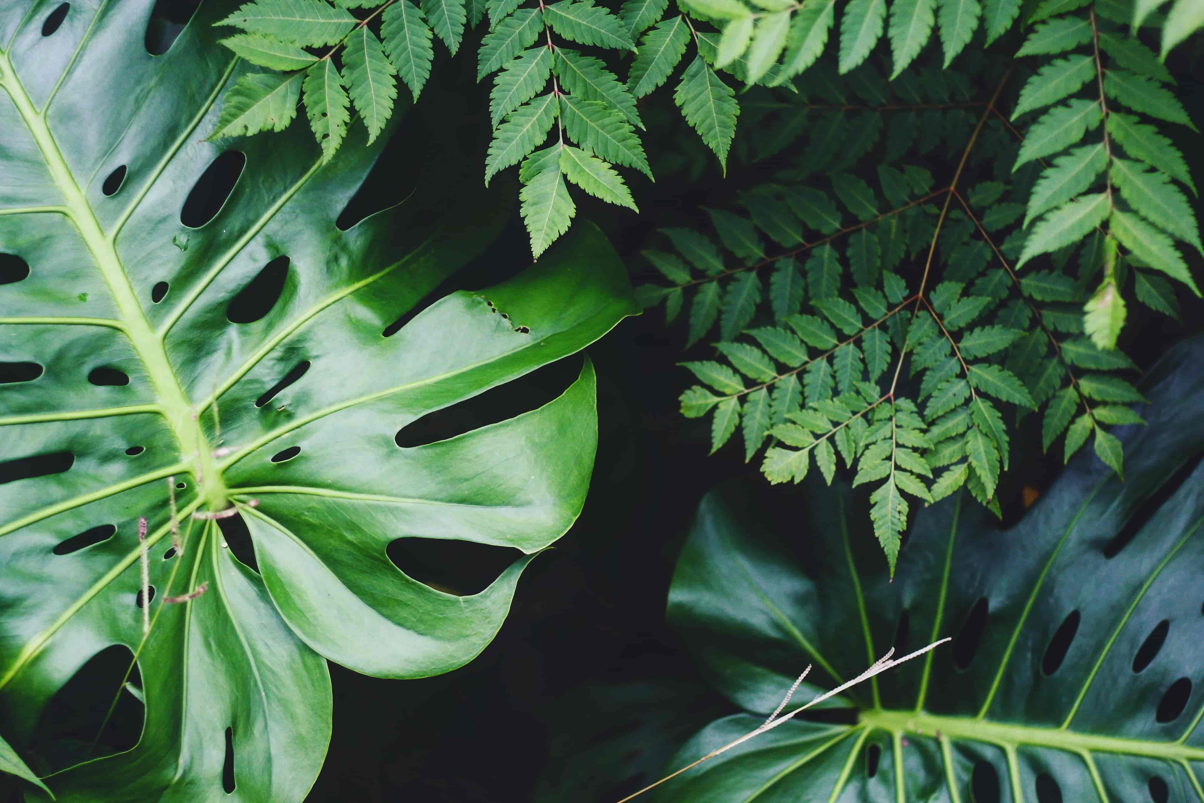 Different types of green plants.