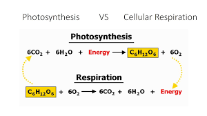 Photosynthesis and cellular respiration equation.